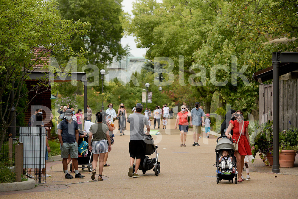 Lincoln Park Zoo in Chicago on Thursday, Sept. 3, 2020. Photo by Mark Black