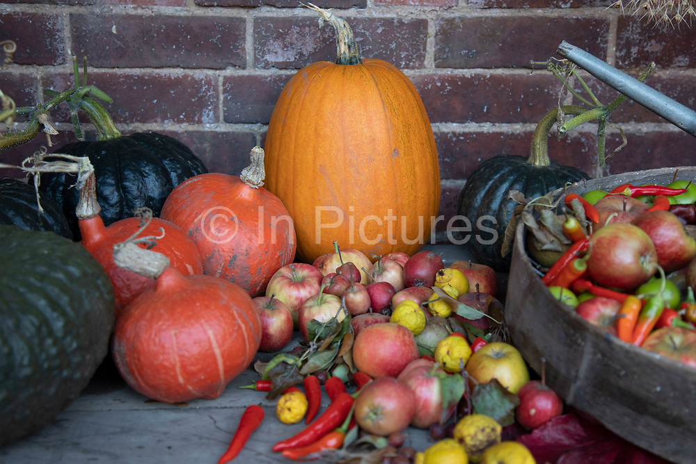 Autumn pumpkins and fruits at Winterbourne Botanic Garden, the botanical garden of the University of Birmingham, located in Edgbaston, Birmingham, United Kingdom. Set in 7 acres, it is notable as a rare surviving example of an early 20th century high status suburban 'villa' garden, inspired by the Arts and Crafts movement of the Edwardian period. Both Winterbourne Botanic Garden and Winterbourne House are owned by the University of Birmingham and are open to the public as a heritage attraction.