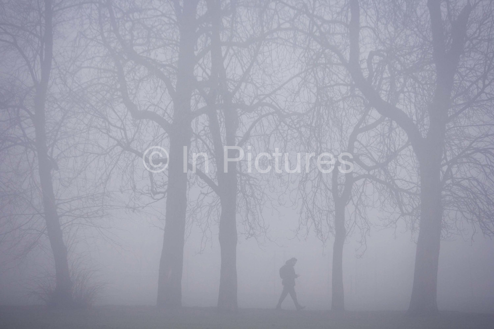 A walking figure in a London park on an early misty morning. Striding through this inner-city public space called Ruskin Park in the London borough of Lambeth. Tall horse chestnut trees stand over him, making the person small against nature. It is still early and blue light makes for a wintry landscape, the freezing fog envelops the park, obscuring the background.