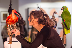 "© Licensed to London News Pictures. 05/10/2018. LONDON, UK. Elle Kaye, an artist who shows taxidermy as art, inspects one of her works ""Scarlet Ibis"", during Not 30%, a sub-exhibition presenting works by female artists. Opening day of The Other Art Fair, presented by Saatchi Art, which runs until 7 October in Bloomsbury.  The fair, which coincides with Frieze Week, is a collection of artworks by independent and emerging artists handpicked by a committee of art world experts.  Visitors and art buyers have the opportunity to meet the artists presenting their work at the fair. Photo credit: Stephen Chung/LNP"