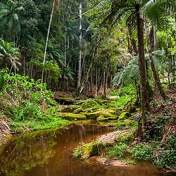 """""""Floresta e Córrego (paisagem) fotografado em Vargem Alta, no Espírito Santo -  Sudeste do Brasil. Bioma Mata Atlântica. Registro feito em 2018.<br /> ⠀<br /> ⠀<br /> <br /> <br /> <br /> <br /> ENGLISH: Forest and Stream photographed in Vargem Alta, Espírito Santo - Southeast of Brazil. Atlantic Forest Biome. Picture made in 2018."""""""