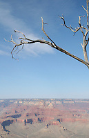 Dead tree at the Grand Canyon in Arizona USA