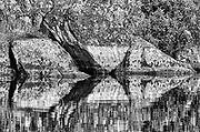 Reflection on Dogtooth Lake, Rushing River Provincial Park, Ontario, Canada