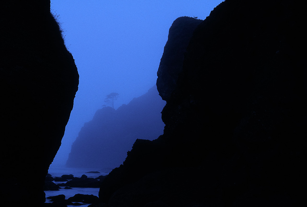 Point of Arches, summer fog, Pacific Coast, Olympic National Park, WA, USA