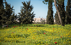 28 February 2020, Jerusalem: The Lutheran World Federation campus, including the Augusta Victoria Hospital campus, is one of few green areas still remaining in East Jerusalem.