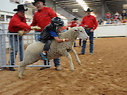 Child Sheep Racing<br /> <br /> Mutton busting is an event held at rodeos similar to bull riding or bronc riding, in which children ride or race sheep<br /> In the event, a sheep is held still, either in a small chute or by an adult handler while a child is placed on top in a riding position. Once the child is seated atop the sheep, the sheep is released and usually starts to run in an attempt to get the child off. Often small prizes or ribbons are given out to the children who can stay on the longest. There are no set rules for mutton busting,<br /> The vast majority of children participating in the event fall off in less than 8 seconds. Age, height and weight restrictions on participants generally prevent injuries to the sheep, and implements such as spurs are banned from use. In most cases, children are required to wear helmets and parents are often asked to sign waivers to protect the rodeo from legal action in that event.<br /> <br /> Photo shows: Amarillo, Texas, USA - Payton Vaquera, age 5, tries to hang on to his ride at the mutton bustin' competition at the Tri-State Fair rodeo in Amarillo, Texas.<br /> ©Exclusivepix