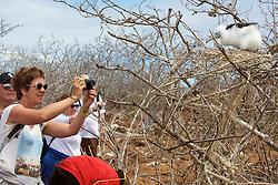 Visitor Photographing Immature Frigatebird, North Seymour