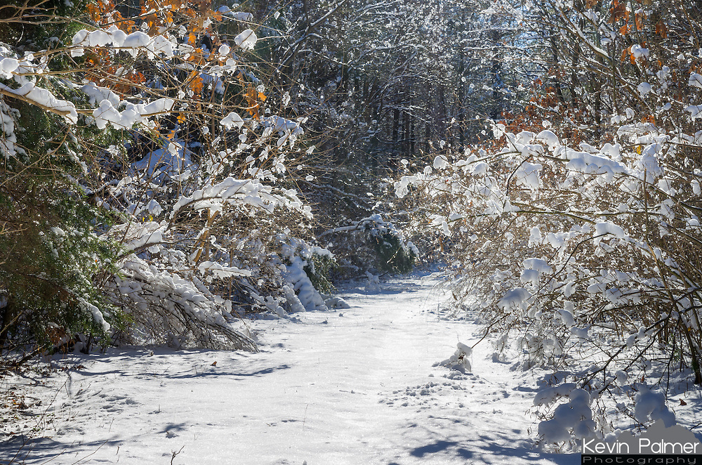 I always like being the first person on a trail after a fresh snowfall. It's easy at Sand Ridge State Forest since there are 150 miles of trails and there usually aren't many visitors.<br />