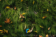A detail of grass and leaves.