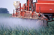A cultivated field is being spared with pesticides, Someset, UK.