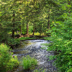 Benton, PA, USA - June 15, 2013: One of the mountain streams in Pennsylvania's Ricketts Glen State Park.