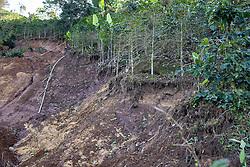 Following the hurricanes Eta and Iota a coffee farm is split by one of thousands of landslides in San Luis Planes, Santa Barbara, Honduras.