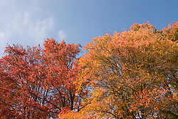 Washington DC; USA: Fall color in Washington DC, produced by the red maple and the sugar maple..Photo copyright Lee Foster Photo # 31-washdc75496