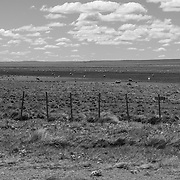 Endless views across grasslands usually include sheep or cattle