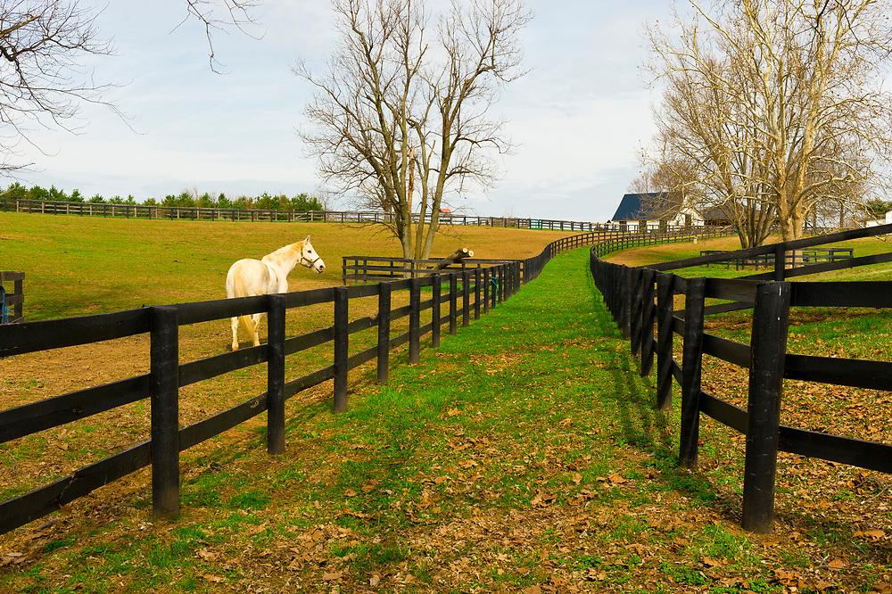 Horse farms, Pisgah Pike, Versailles (near Lexington), Kentucky USA