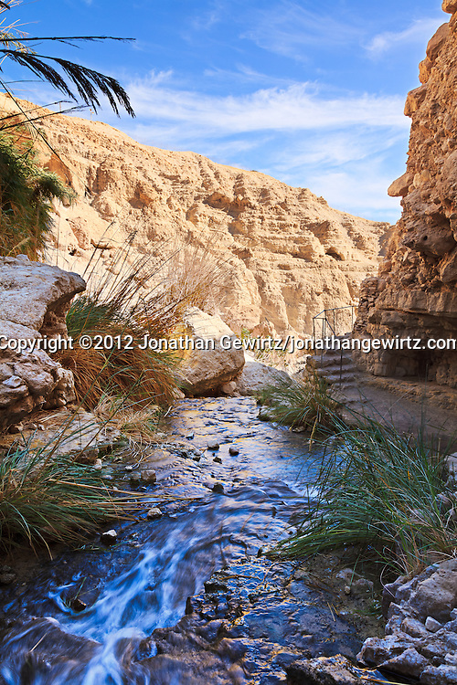 Nahal David flows over rocks in a canyon in the Ein Gedi nature preserve. WATERMARKS WILL NOT APPEAR ON PRINTS OR LICENSED IMAGES.