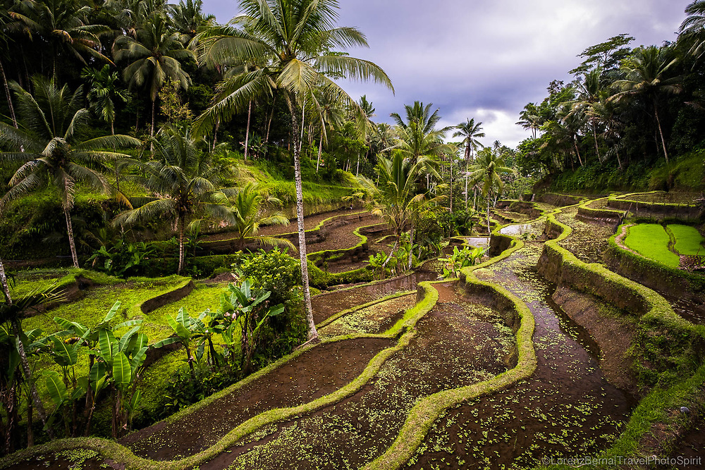 Balinese landscape in Tegallalang