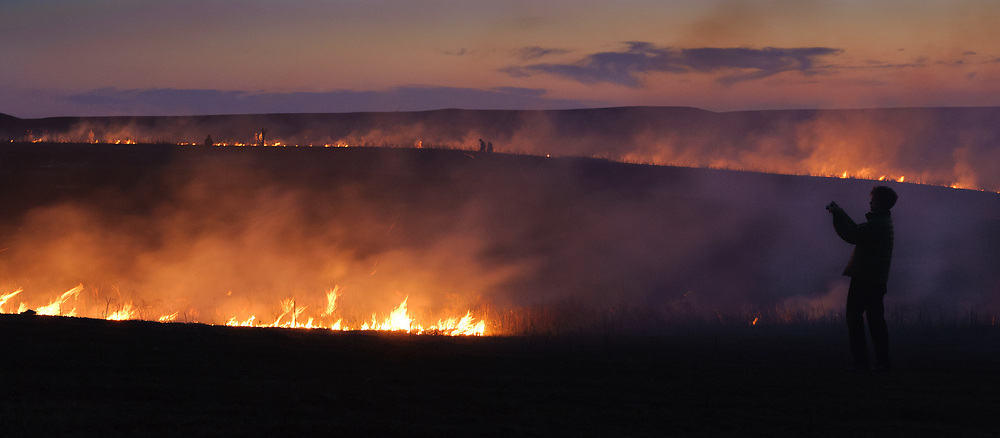 """An unidentified participant at the """"Flames in the Flint Hills"""" photographs the burning prairie at the Flying W Ranch near Clements, Kansas. This agritourism event allows ranch guests to take part in lighting the prescribed burns. Prairie grasses in the Kansas Flint Hills are intentionally burned by land mangers and cattle ranchers in the spring to prepare the land for cattle grazing and help maintain a healthy tallgrass prairie ecosystem. The burning is also an effective way of controlling invasive plants and trees. The prairie grassland is burned when the soil is moist but grasses are dry. This allows the deep roots of the grasses to survive and the burned grasses on the soil surface return as nutrients to the soil. These nutrients allow for the rapid growth of new grass. After approximately two weeks of burning, new grass emerges. Less than four percent of the original 140 million acres of tallgrass prairie remains in North America. Most of the remaining tallgrass prairie is in the Flint Hills in Kansas."""