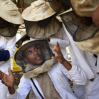 "Metalem Fanthun, age 27, head of Ambrosia beekeeping demonstration and training centre in Mecha, teaches women from Mecha, the importance of maintaining modern hives.<br /> <br /> Harvesting honey supplements the income of small farmers in the Ethiopian region of Amhara where there is a long tradition of honey production. However, without the resources to properly invest in production and the continued use of of traditional, low-yielding hives, farmers have not been able to reap proper reward for their labour. <br /> <br /> The formation of the Zembaba Bee Products Development and Marketing Cooperative Union is an attempt to realize the potential of honey production in Amhara and ensure that the benefits reach small producers. <br /> <br /> By providing modern, high-yield hives, protective equipment and training to beekeepers, the Cooperative Union helps increase production and secure a steady supply of honey for which there is growing demand both in and beyond Ethiopia. The collective processing, marketing and distribution of Zembaba's ""Amar"" honey means that profits stay within the cooperative network of 3,500 beekeepers rather than being passed onto brokers and agents. The Union has signed an agreement with the multinational Ambrosia group to supply honey to the export market. <br /> <br /> Zembaba Bee Products Development and Marketing Cooperative Union also provides credit to individual members and trains carpenters in the production of modern hives. <br /> <br /> Photo: Tom Pietrasik<br /> Bahir Dhar, Amhara. Ethiopia<br /> November 17th 2010"