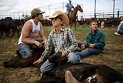 Crowley McCuistion of Sugar City, Colo. holds a calf as it's branded on Gray's Ranch in Crowley County, Colo. on June 1, 2016. During the day 260 calves will be wrangled, branded, vaccinated and tagged. Ranchers in the area rely on each other to help with brandings, which are also a social event in the rural county. (For The New York Times)