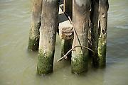 wooden dock post