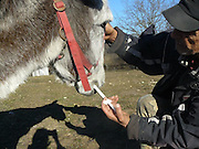 Donkey Duo Saved From Being Turned Into Sausages On Christmas<br /> <br /> When most people think of donkeys they immediately think of Donkey from the Shrek movies, an association which makes one smile because of the upbeat and optimistic character.<br /> The reality is unfortunately very different, as these animals are usually used only for one thing: carrying heavy loads. They live a sad life filled with hard work, whipping and other forms of abuse.<br /> Unfortunately, in some parts of the world, they are also sadly turned into meat for sausages – usually when they are no longer able to carry heavy loads. Bulgaria is one of the countries where this happens, and this Christmas, two donkeys were miraculously saved from being brutally slaughtered for their meat. They were saved thanks to a sanctuary for abused farm animals where two people work tirelessly to save animals from abuse and violent death and give the care and love they deserve.<br /> <br /> Photo shows: A few days later, the same seller from the classified ad called the sanctuary…<br /> ©Exclusivepix Media