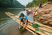 Women collect rock river weed (Cladophora sp.) on the shore of the Nam Ou River in Ban Phu Muang, Laos. The green algae is commonly eaten as a delicacy, either boiled or dried in sheets.