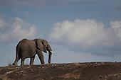 2011-03: Masai Mara Wildlife Reserve