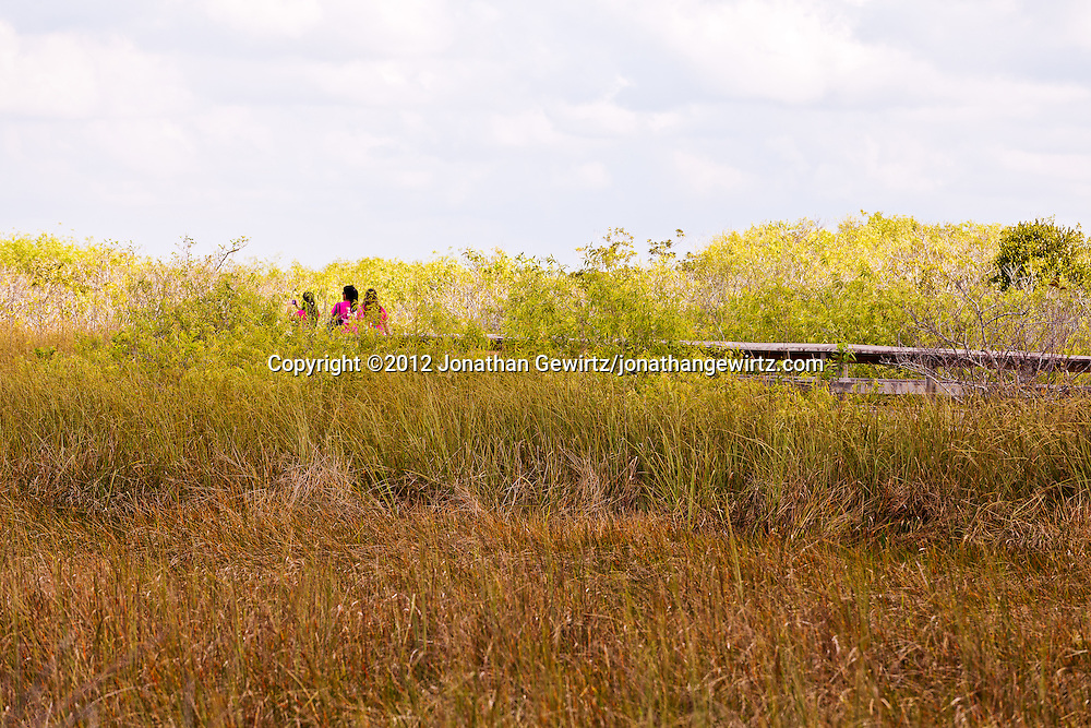 Students on an elevated walkway on the popular Anhinga Trail in Everglades National Park, Florida. WATERMARKS WILL NOT APPEAR ON PRINTS OR LICENSED IMAGES.