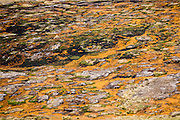 Large mats of orange algae color a hot springs. Day 7 of 9 days trekking around the Cordillera Huayhuash in the Andes Mountains, Peru, South America.