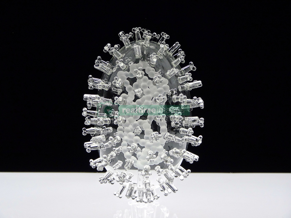 """IN PHOTO: Avian Flu<br /> <br /> Internationally-renowned British artist Luke Jerram has created a coronavirus glass sculpture in tribute to the huge global scientific and medical effort to combat the pandemic.<br /> <br /> Made in glass, at 23cm in diameter, it is 1 million times larger than the actual virus. <br /> <br /> It was commissioned 5 weeks ago by a university in America to reflect its current and future research and learning in health, the environment and intelligent systems, and its focus on solving global challenges.  <br /> <br /> Luke says: """"Helping to communicate the form of the virus to the public, the artwork has been created as an alternative representation to the artificially coloured imagery received through the media. In fact, viruses have no colour as they are smaller than the wavelength of light."""" <br /> <br /> """"This artwork is a tribute to the scientists and medical teams who are working collaboratively across the world to try to slow the spread of the virus. It is vital we attempt to slow the spread of coronavirus by working together globally, so our health services can manage this pandemic."""" <br /> <br /> Made through a process of scientific glassblowing, the coronavirus model is based on the latest scientific understanding and diagrams of the virus.  <br /> <br /> Profits from this glass model are going to Médecins Sans Frontières (MSF) who will be assisting developing countries deal with the fallout of the coronavirus epidemic. <br /> <br /> This new model is just the latest in Luke's Glass Microbiology series of virus sculptures. Luke and his glassblowing team have, in the past, made other sculptures of viruses from swine flu and Ebola to smallpox and HIV.<br /> <br /> Respected in the scientific community, the glass sculptures have featured inThe Lancet,Scientific American,British Medical Journal (BMJ)and on the front cover ofNature Magazine.  <br /> <br /> TheGlass Microbiologysculptures are in museum collections around the world, in"""