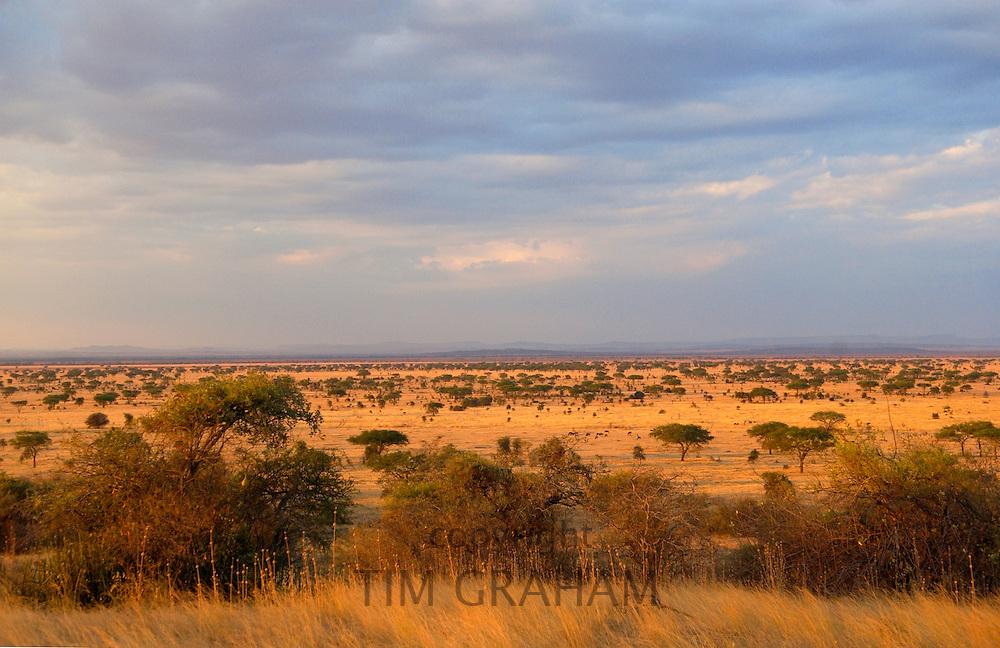 Serengeti Plains,Tanzania, East Africa