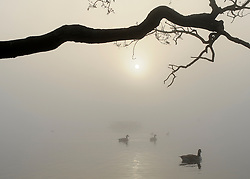 © Licensed to London News Pictures. 15/03/2012. Richmond, UK. Ducks and geese on a lake with the sun breaking throughout the heavy fog.  Foggy conditions at Richmond Park this morning, 15 march 2012. The weather is expected to be good across large parts of the UK for the day.  Photo credit : Stephen SImpson/LNP