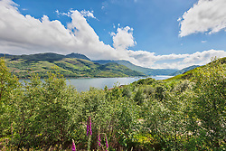 Scenic view of lake amidst green plants and mountain, Loch ailort, Scotland, UK