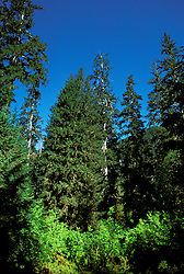 WA: Washington State; Olympic National Park, Hoh Rain Forest   .Photo Copyright: Lee Foster, lee@fostertravel.com, www.fostertravel.com, (510) 549-2202.Image: waolym208