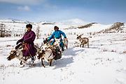 Tsaatan reindeer herders riding their reindeer (Rangifer tarandus) up a snowy hill in the mountains, Khovsgol Province, Mongolia