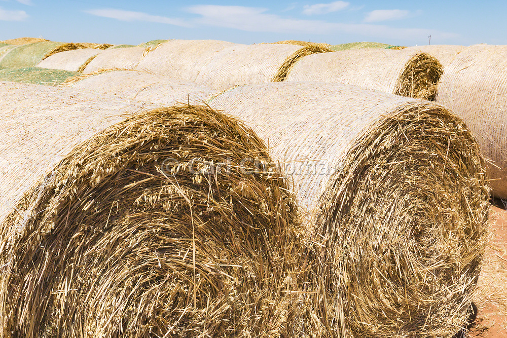 Rows of round hay bales on a farm after harvest  in rural Gerahmin, Victoria, Australia <br /> <br /> Editions:- Open Edition Print / Stock Image