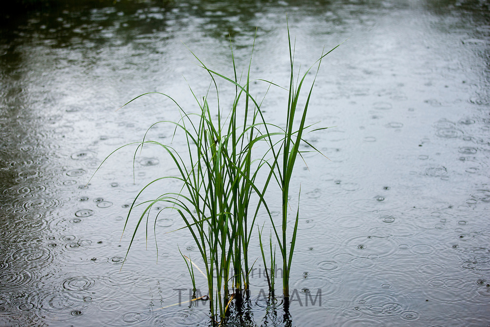 Rainfall onto a pond in Oxfordshire, UK