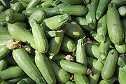 A pile of fresh Courgette (zucchini)