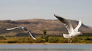Israel, Galilee, Sea of Galilee