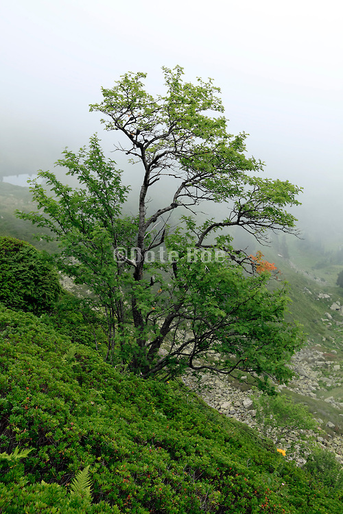 tree on a mountainside with fog