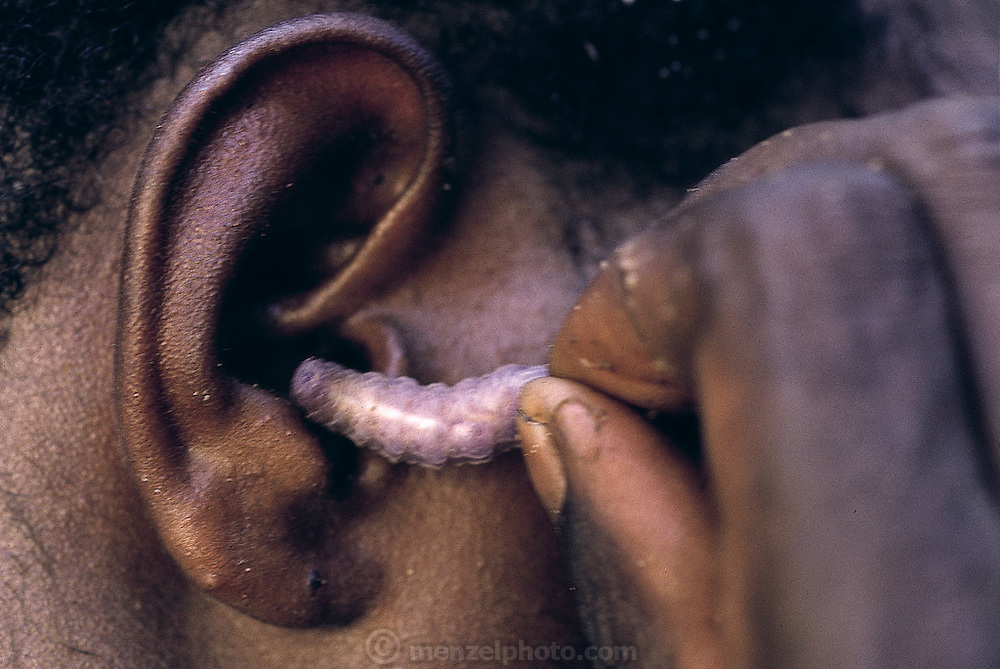 """An Asmat native demonstrates the technique of cleaning the ear canal with a young sago grub. """"You have to hold onto the tail"""", they caution, """"never let go, you don't want the worm getting lost and coming out the other ear!"""" Down river from the Sawa village, Irian Jaya, Indonesia. (Man Eating Bugs page 74 Top)"""
