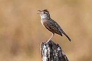 Savuti, Chobe National Park, Botswana