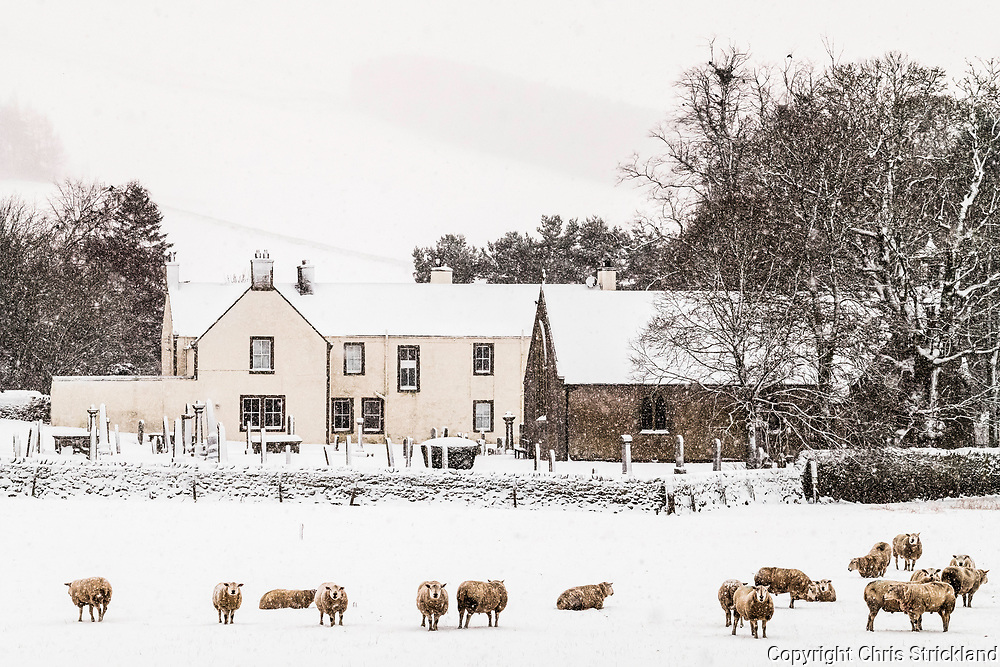 Hownam, Jedburgh, Scottish Borders, UK. 27th February 2018. Texels in the snow next to Hownam village Church in the foothills of the Cheviot Hills in the Scottish Borders.