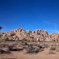 USA, California, Joshua Tree.  Joshua Trees and Rock Formations.