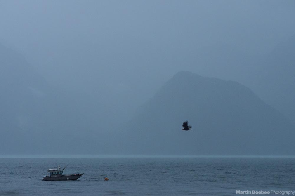 Bald Eagle and fishing boat on Resurrection Bay, Seward, Alaska