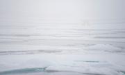 Polar bear in the fog at 81,5 degrees north, off Spitsbergen, Svaalbard in July 2012.