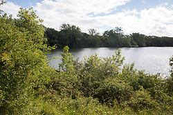 Calvert, UK. 27 July, 2020. A view of the lake at Calvert Jubilee Nature Reserve. On 22nd July, the Berks, Bucks and Oxon Wildlife Trust (BBOWT) reported that it had been informed of HS2's intention to take possession of part of Calvert Jubilee nature reserve, which is home to bittern, breeding tern and some of the UK's rarest butterflies, on 28th July to undertake unspecified clearance works in connection with the high-speed rail link.