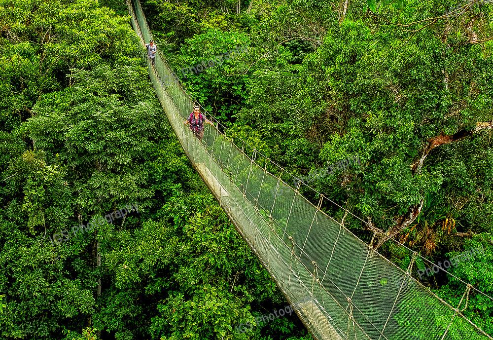Canopy Walkway in the Sucasari Reserve of the Amazon Rainforest