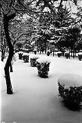 13/01/1963<br /> 01/13/1963<br /> 13 January 1963<br /> Snow scenes from St Arnaud's, Merrion Road, Ballsbridge  Co. Dublin. View of snowy garden.